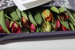 10 Dubbele Tulpen